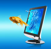 Golden Fish And Screen — Stock Photo