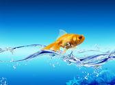 Gyllene fisk — Stockfoto