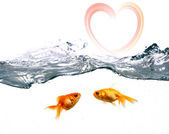 Two Golden Fishes — Stock Photo