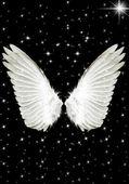 крылья ангела — Стоковое фото