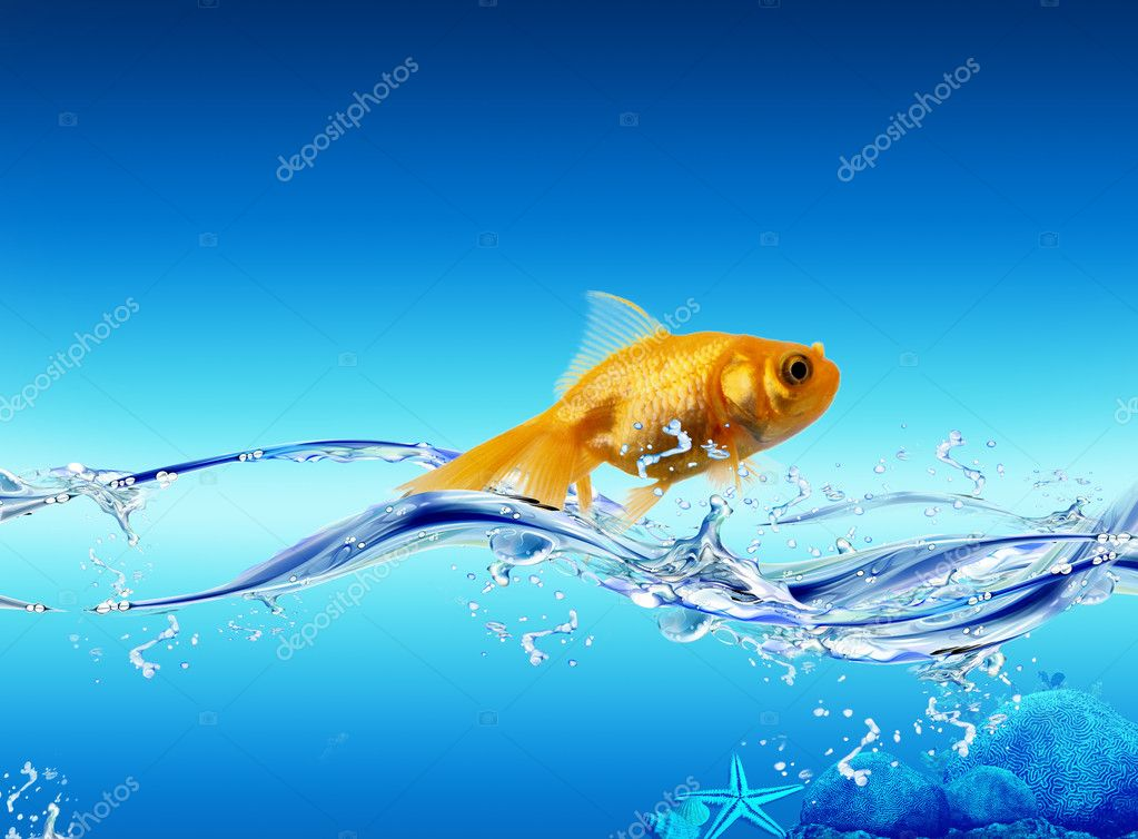 Picture with nice golden shining fish in the water  Stock Photo #1731387