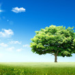 Green tree - Stockfoto