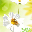 Two daisies - Stockfoto