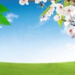 Цветение свежий деревья — Стоковое фото