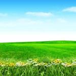 Spring flowers under blue sky — Stock Photo