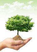 дерево на руке — Стоковое фото