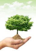 Tree on the hand — Stockfoto