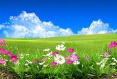Flores del campo — Foto de Stock