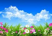 春天一天 — 图库照片