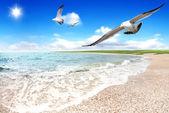 на берегу моря — Стоковое фото
