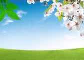 Blooming fresh trees — Stock Photo