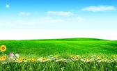 Vårblommor under blå himmel — Stockfoto