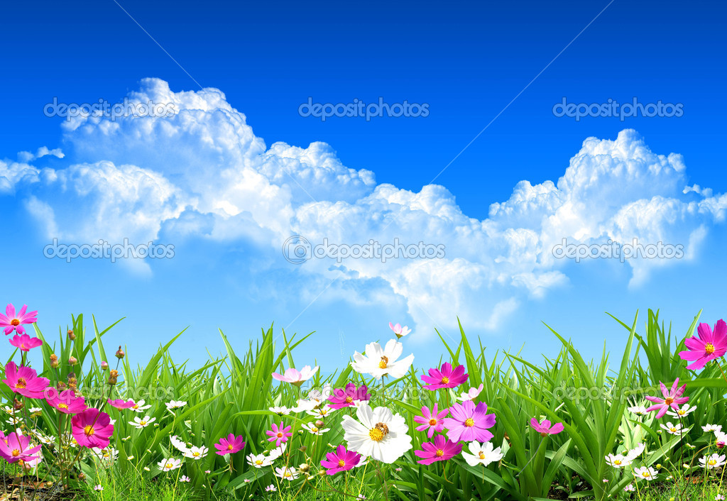 Nice spring day with nice and fresh field flowers — Foto de Stock   #1758961
