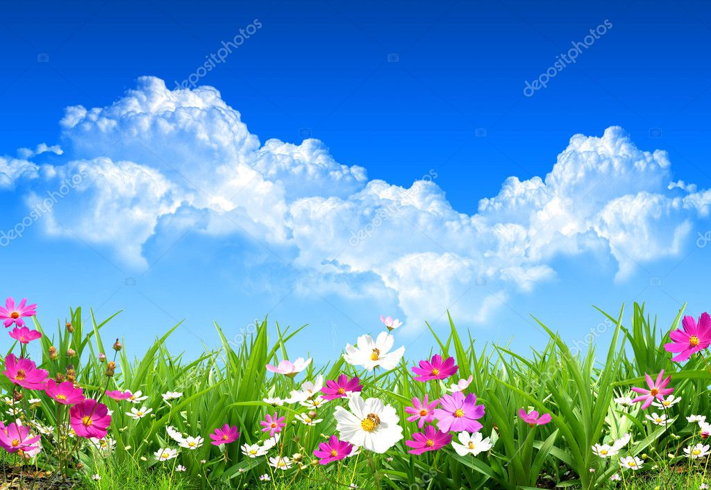 Nice spring day with nice and fresh field flowers  Stock Photo #1758961