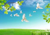 Primavera fresca — Foto Stock