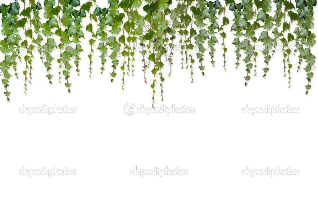 Green fresh falling leaves on white background — Stock Photo #1780384