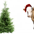 Christmas Tree and a calf — Stock Photo