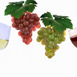 Stock Photo: Grapes and vine