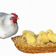 Hen and chichens - Stock Photo
