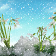 Snow drop and winter — Stock Photo