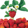 Strawberries — Lizenzfreies Foto