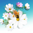 Camomile and a bee - Stockfoto