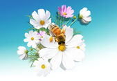 Camomile and a bee — Stock Photo