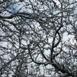 Stock Photo: Sprigs of tree in winter