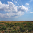 Steppe — Stock Photo