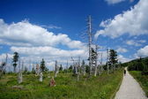 Dead trees in mountains — Stock Photo