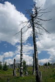 Dead trees — Stock Photo