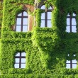 Royalty-Free Stock Photo: Ivy covered building