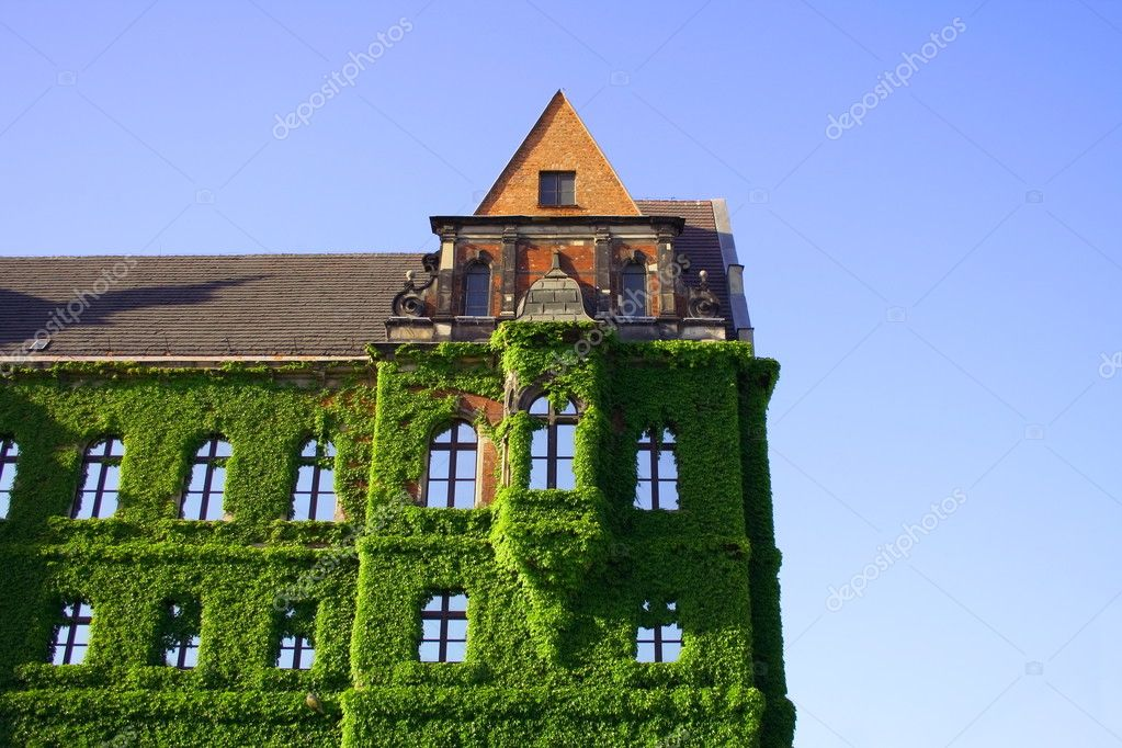 Historic building covered with green ivy — Stock Photo #2110476
