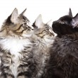Kittens — Stock Photo #2098458