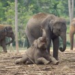 Elephant mother and baby playing - Stock Photo