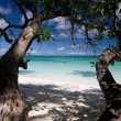 White sand beach with trees — Stock Photo #2364883