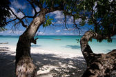 White sand beach with trees — Stock Photo