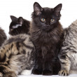 Kittens — Stock Photo #2450490