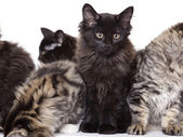 Kittens — Stock Photo