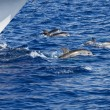 Dolphins playing — Stock Photo #2521148