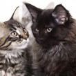 Kittens — Stock Photo #2522593
