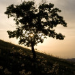 Tree in sunset — Stock Photo