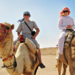 Traveling on camels in egypt - Stock Photo