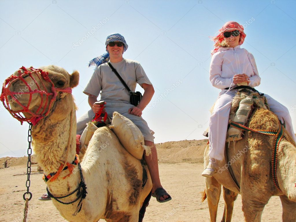 Traveling on camels in egypt desert — Stock Photo #1608912