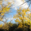 Golden autumn landscape, sky — Stock Photo