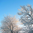 Winter branches in rime — Stock Photo