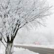 Winter fog — Stockfoto