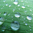 Morning dew on green leaf - Stock Photo