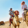 Stock Photo: Traveling on camels in egypt