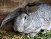 Rabbit portrait — Stock Photo
